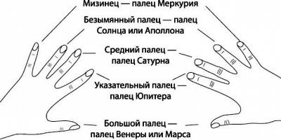 пальцы на руке обозначение