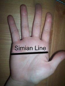 Расположение линии симиан