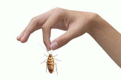 Заговор на таракана