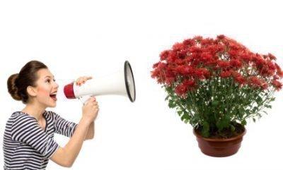 Заговор на растения