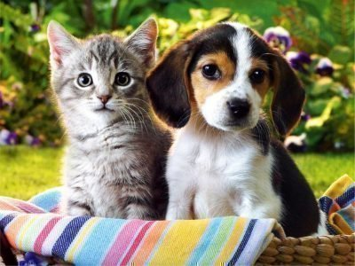 Заговор на продажу животных