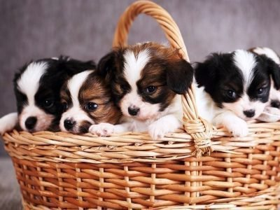 Заговоры на продажу щенков