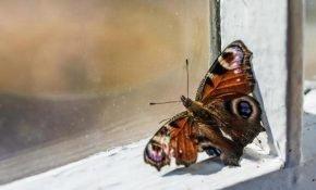 Приметы и суеверия о бабочках