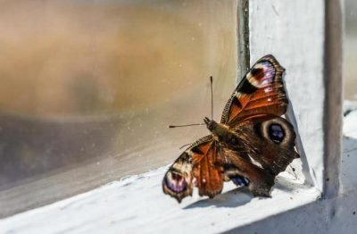 Бабочка в доме - что значит