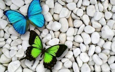 Несколько бабочек - к приходу гостей