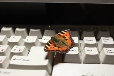 Бабочка села на клавиатуру