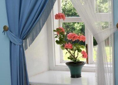 Розовая герань на окне