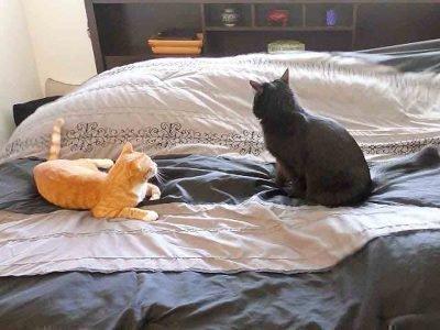 кот нагадил на кровать примета