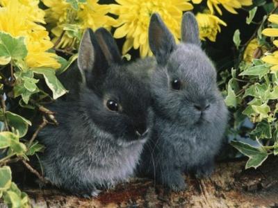 кролик и кролик совместимость