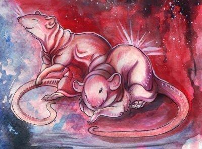 крыса и крыса совместимость