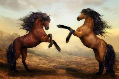 лошадь и бык совместимость