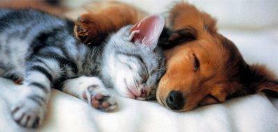 собака и кролик совместимость