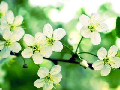 Цветущая ветвь в кошельке привлекает деньги