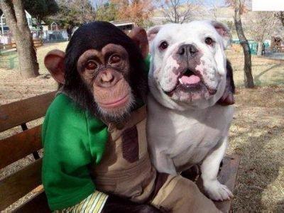 Обезьяна в обнимку с собакой на скамейке в парке