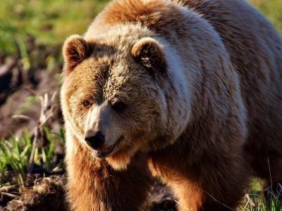 Медведб - символ силы и отваги