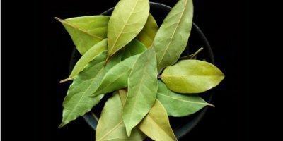 Лавровые листья в вазочке