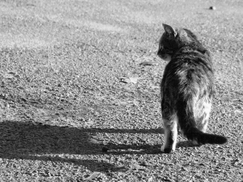 Почему молодые и старые кошки уходят из дома