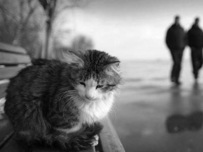 кот ушел из дома примета