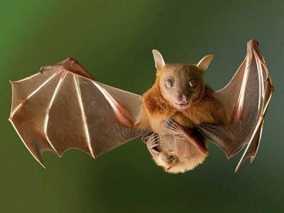 летучая мышь залетела в дом примета