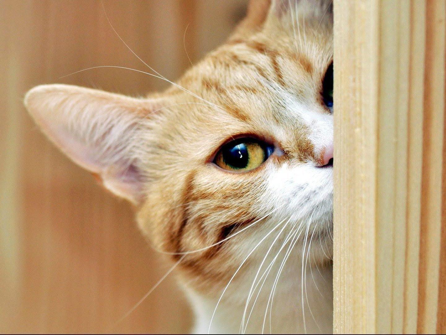 Если кот пришел в дом: примета