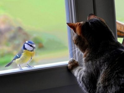 примета синица на окне