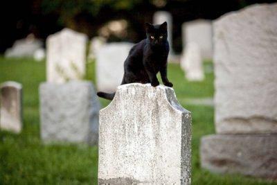 Черная кошка - душа ведьмы