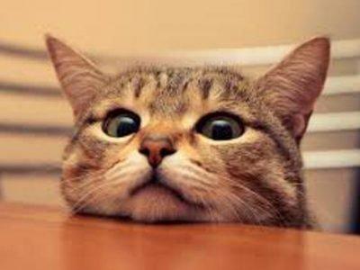 Мордочка рыжего котенка на столе