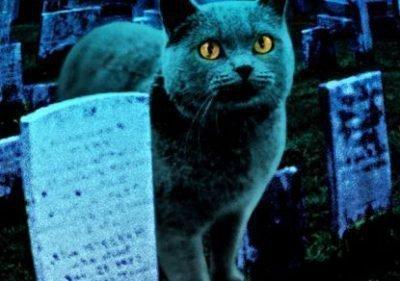 Животные и смерть - приметы