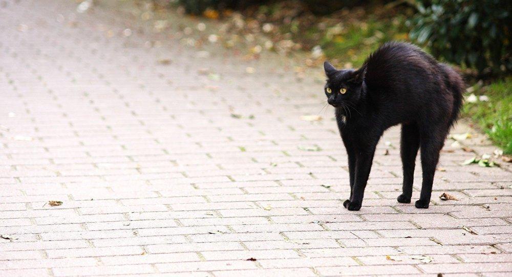 Приметы о бродячих котах