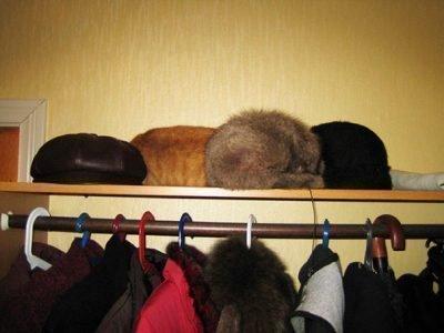 Забыть шапку в гостях - примета