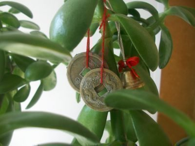 Монетки на денежном дереве
