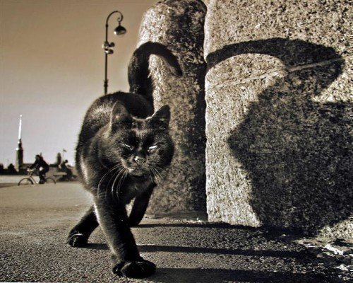 Приметы о черных котах