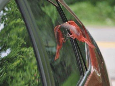 Птица бьется в стекло
