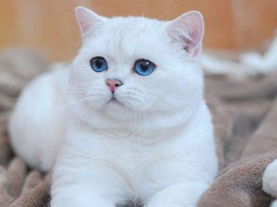 Белый котенок на покрывале