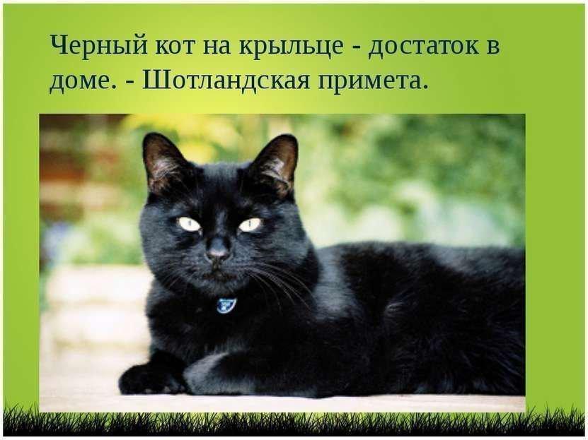 Шотландская примета о черной кошке