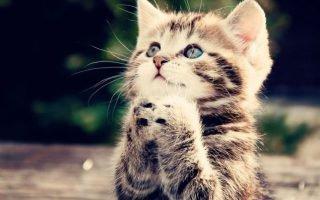 Молитвы для возвращения пропавшего животного домой