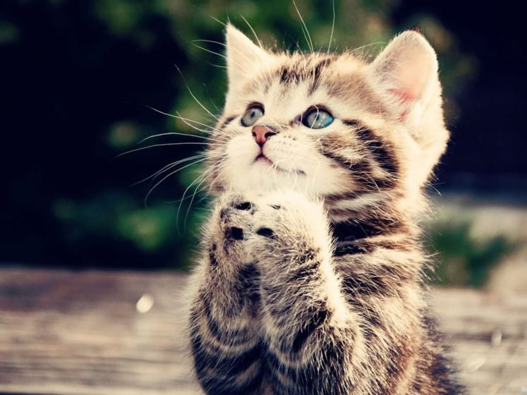 Молитва о потерянной кошке