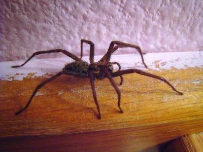 паук в доме к чему примета