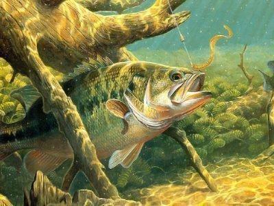 рыбацкие приметы