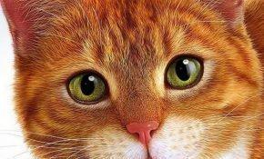 Известные приметы о рыжем коте в доме
