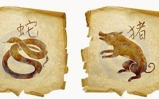 Гороскоп совместимости знаков Змеи и Кабана