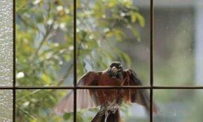 Приметы о птице, которая ударилась в окно