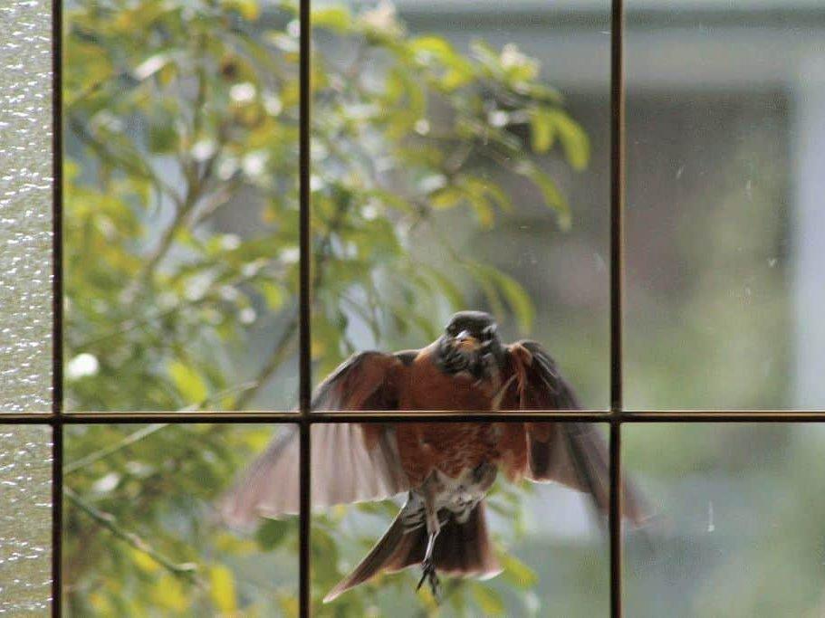 Примета — птица ударилась в окно и улетела, о чем это говорит