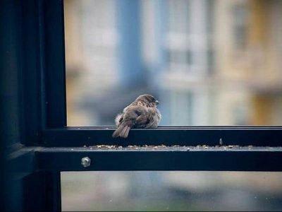 птица ударилась в окно примета