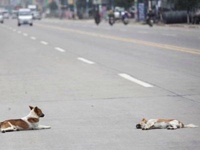 Собака погибла под колесами - приметы