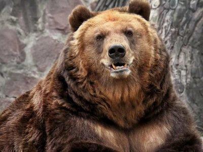 чертог медведя