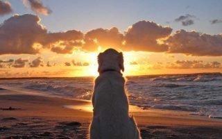 Куда попадают души собак после смерти