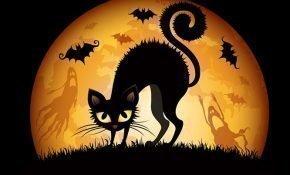 Если кошка перебежала вам дорогу