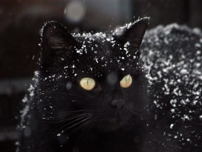 кошка черная дорогу перебежала