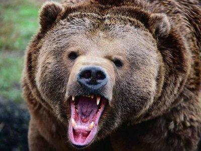 оберег медвежий клык